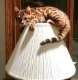 lamp-climbing