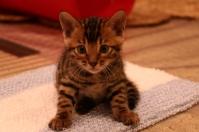 kitten6